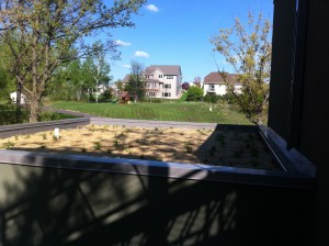 Passive House in the Woods Green Roof